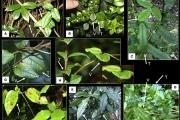 Investigador del Depto. de Biología descubre planta con impresionante capacidad de mimetismo